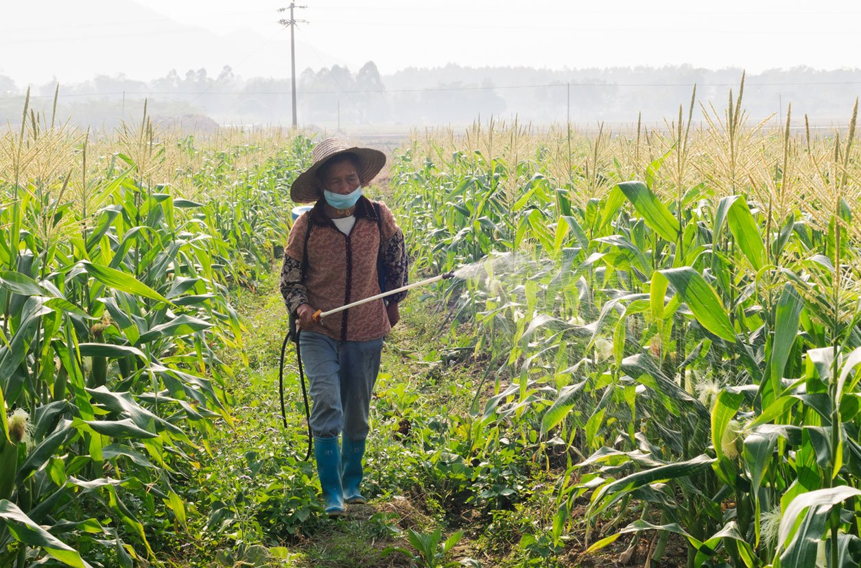 PESTICIDE USE IN CHINA